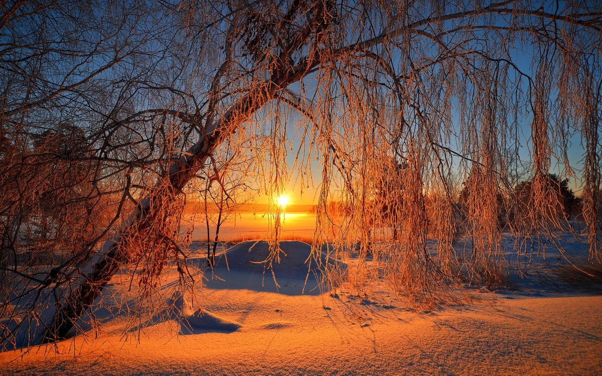 Картинка дерево, солнце, снег, закат на рабочий стол. Скачать фото обои пейзажи