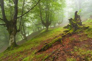 Фото бесплатно туман, горы, холмы