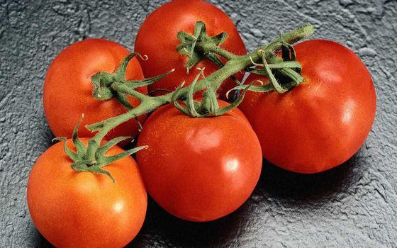 Бесплатные фото помидоры,томаты,красные,спелые,веточка,зеленая