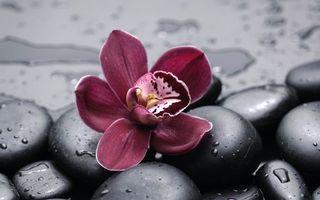 Бесплатные фото цветок, дождь, лепестки, галька