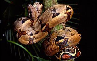 Бесплатные фото змея,шкура,чешуя,узор,ветка,листья