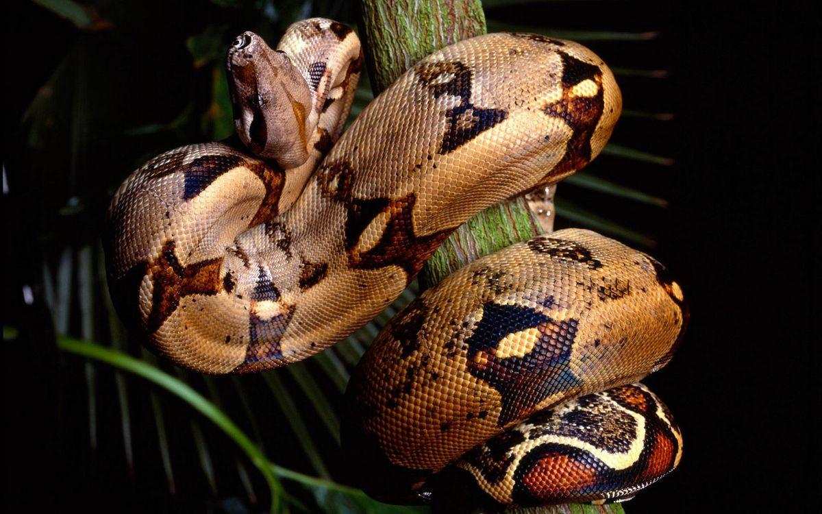 Обои змея, шкура, чешуя, узор, ветка, листья на телефон   картинки животные