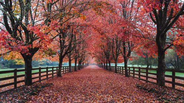 Фото бесплатно Норт-Бенд, Вашингтон, осень