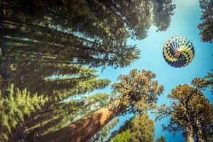Фото бесплатно воздушный шар, макушки деревьев