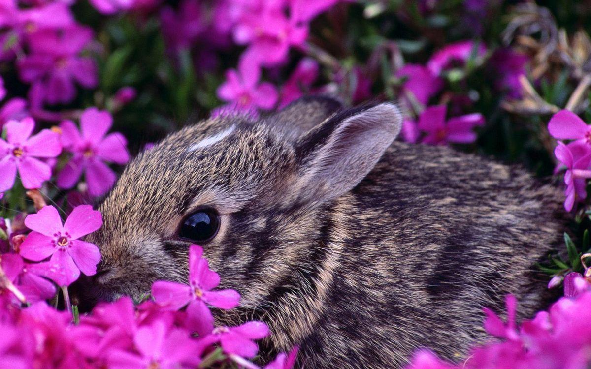Фото бесплатно заяц, кролик, морда, уши, шерсть, цветы, животные