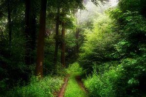 Фото бесплатно лес, деревья, дорога, туман, природа