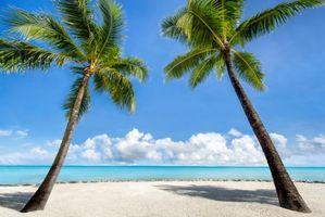 Фото бесплатно пляж, пальмы, остров