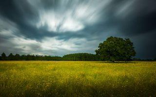 Бесплатные фото поле,трава,деревья,небо,тучи