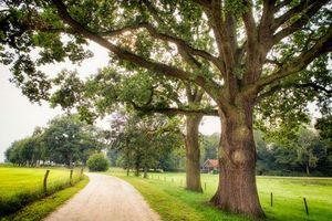 Фото бесплатно Девентер, Нидерланды, дорога, поля, дома, пейзаж