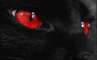 Бесплатные фото кошка,черная,морда,глаза,красные,шерсть