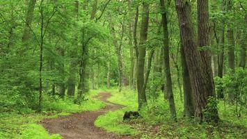 Бесплатные фото лес, деревья, кустарник, трава, дорога