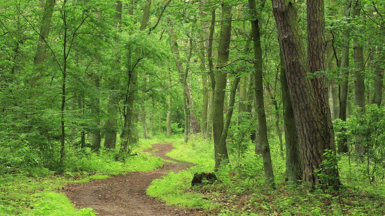 Фото бесплатно лес, деревья, кустарник, трава, дорога, пейзажи