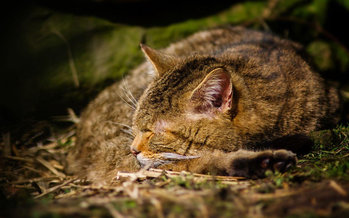 Фото бесплатно трава, салома, кошка, спит, свернулась, клубочком, ситуации
