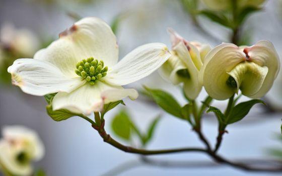 Photo free white, green, branch