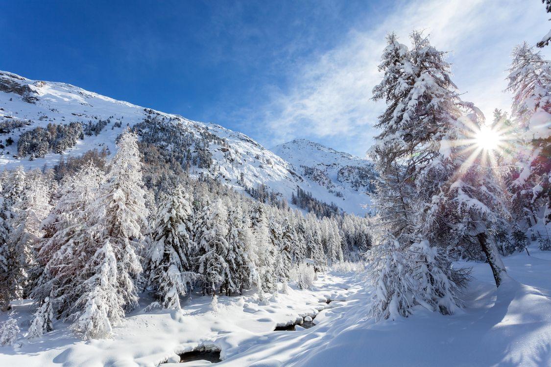 Фото зима горы деревья снег - бесплатные картинки на Fonwall