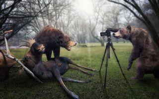 Бесплатные фото медведи,лось,добыча,фотоаппарат,трава,деревья