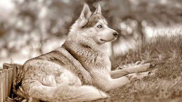 Фото бесплатно собака, хвост, шерсть