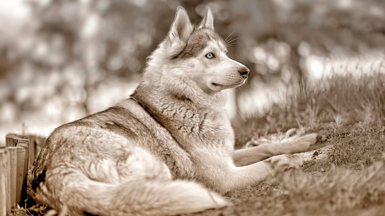 Фото бесплатно собака, хвост, шерсть - на рабочий стол