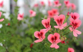 Фото бесплатно клумба, лепестки, розовые