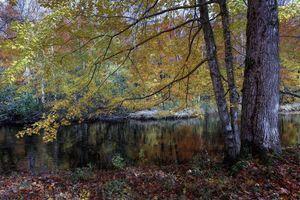 Бесплатные фото осень,река,деревья,лес,природа