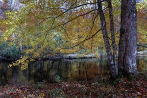 Beautiful wallpaper autumn, river desktop