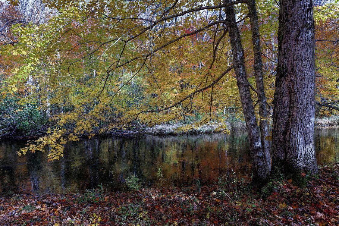Обои осень, река, деревья картинки на телефон