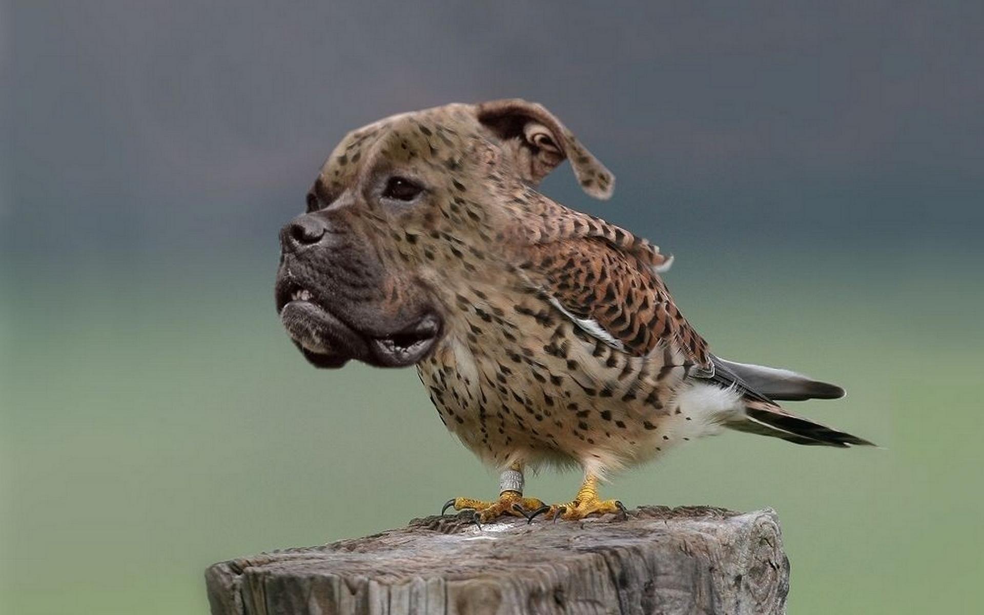 обои морда, собака, тело, птица картинки фото