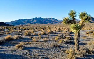 Бесплатные фото долина,трава,тень,дерево,горы,небо