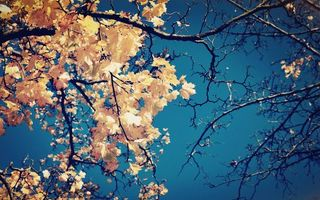 Заставки ветви дерево,листья,осень