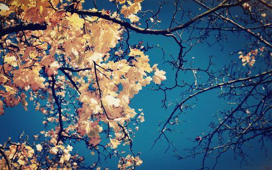 Фото бесплатно ветви дерево, листья, осень