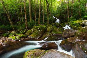 Бесплатные фото Great Smoky Mountains National Park,речка,водопад,деревья,лес,камни,природа