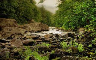 Фото бесплатно река, течение, камни, трава, деревья, горы