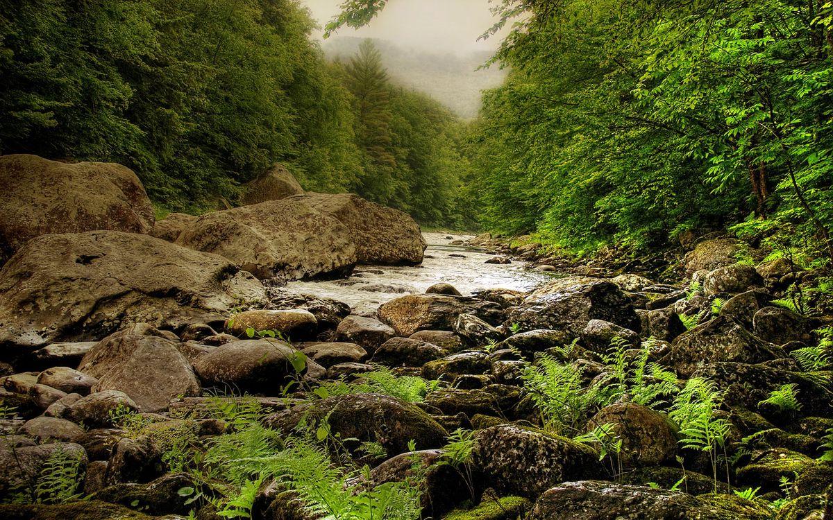 Фото бесплатно река, течение, камни, трава, деревья, горы, природа