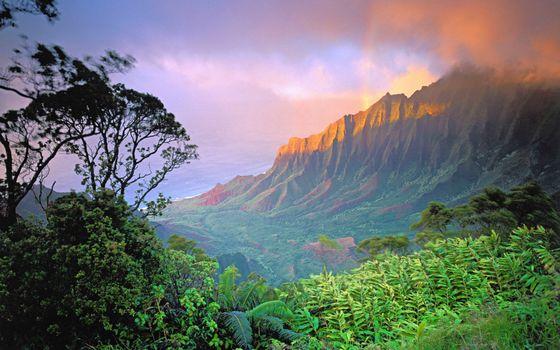 Фото бесплатно гора, джунгли