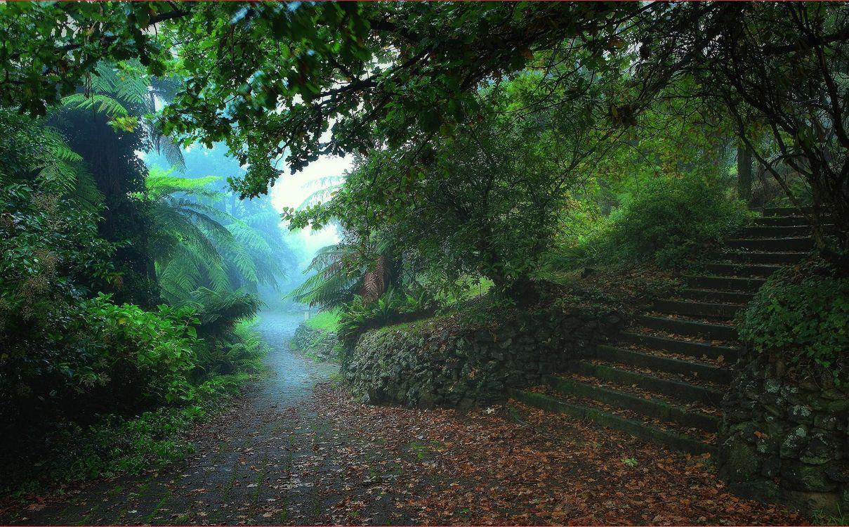 Фото бесплатно Катумба, Австралия, парк, дорога, деревья, ступени, пейзаж, пейзажи