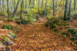 Фото бесплатно осень, лес, деревья, дорога, пейзаж