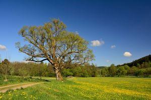 Бесплатные фото поле,дорога,деревья,цветы,пейзаж