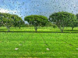 Бесплатные фото стекло,капли,поле,деревья