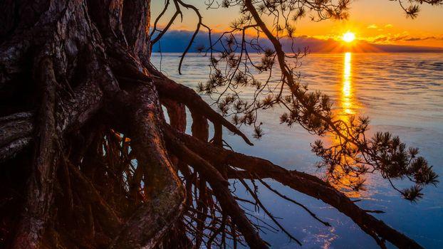 Бесплатные фото берег,дерево,корни,ветви,озеро,горизонт,солнце,закат