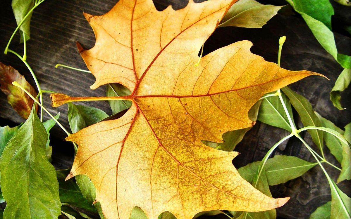 Фото бесплатно листья, зеленые, желтый, сухой, прожилки, макро