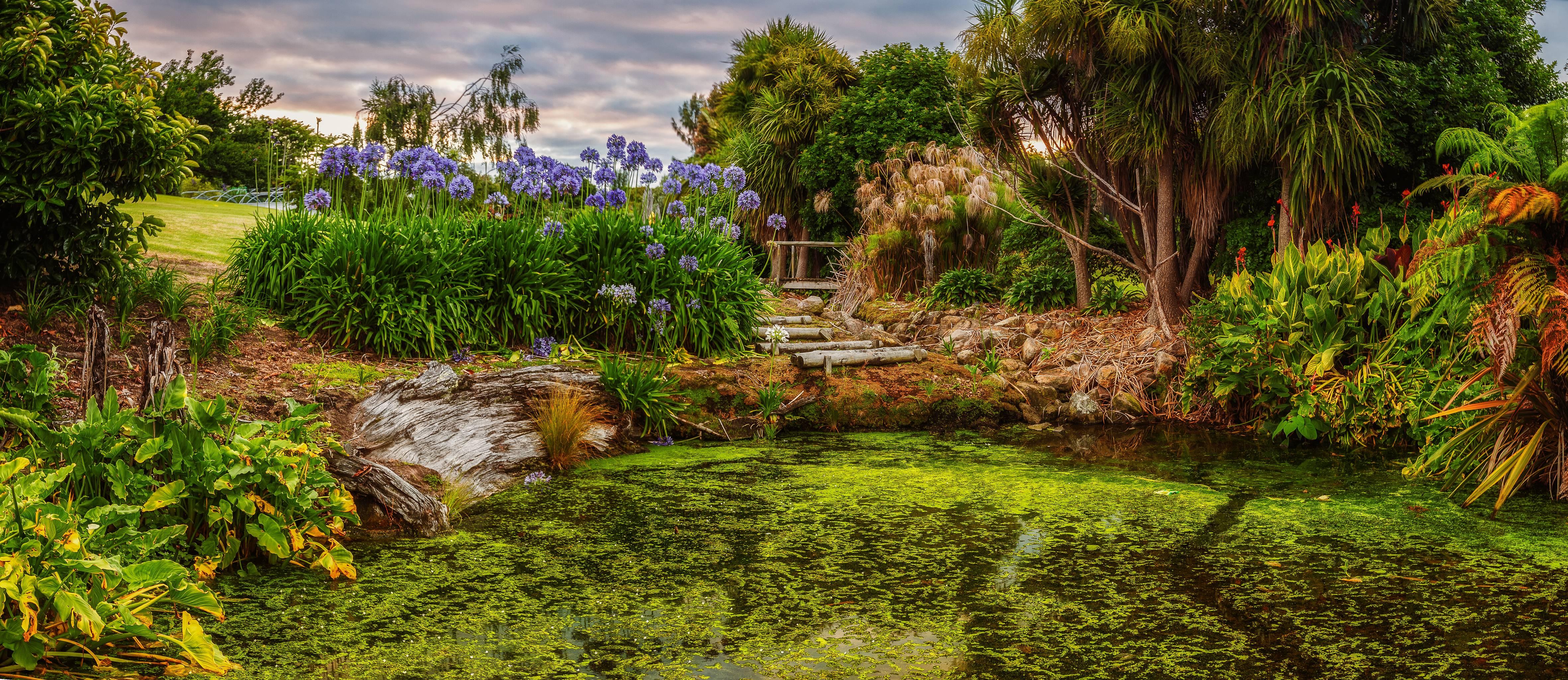 пруд, водоём, цветы
