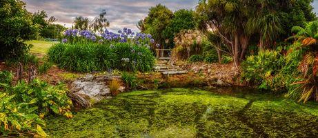 Фото бесплатно пруд, водоём, цветы