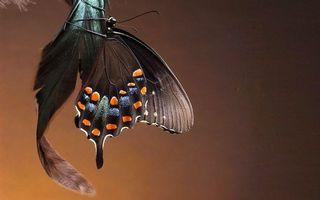 Бесплатные фото бабочка,крылья,узор,усики,лапки,перо