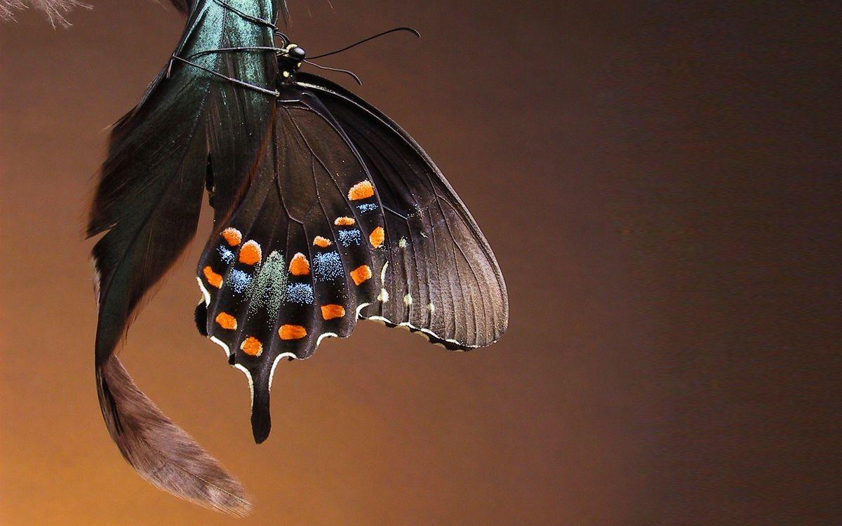 Фото бесплатно усики, лапки, крылья - на рабочий стол