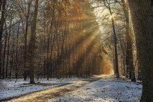 Фото бесплатно лес, солнечные лучи, туман