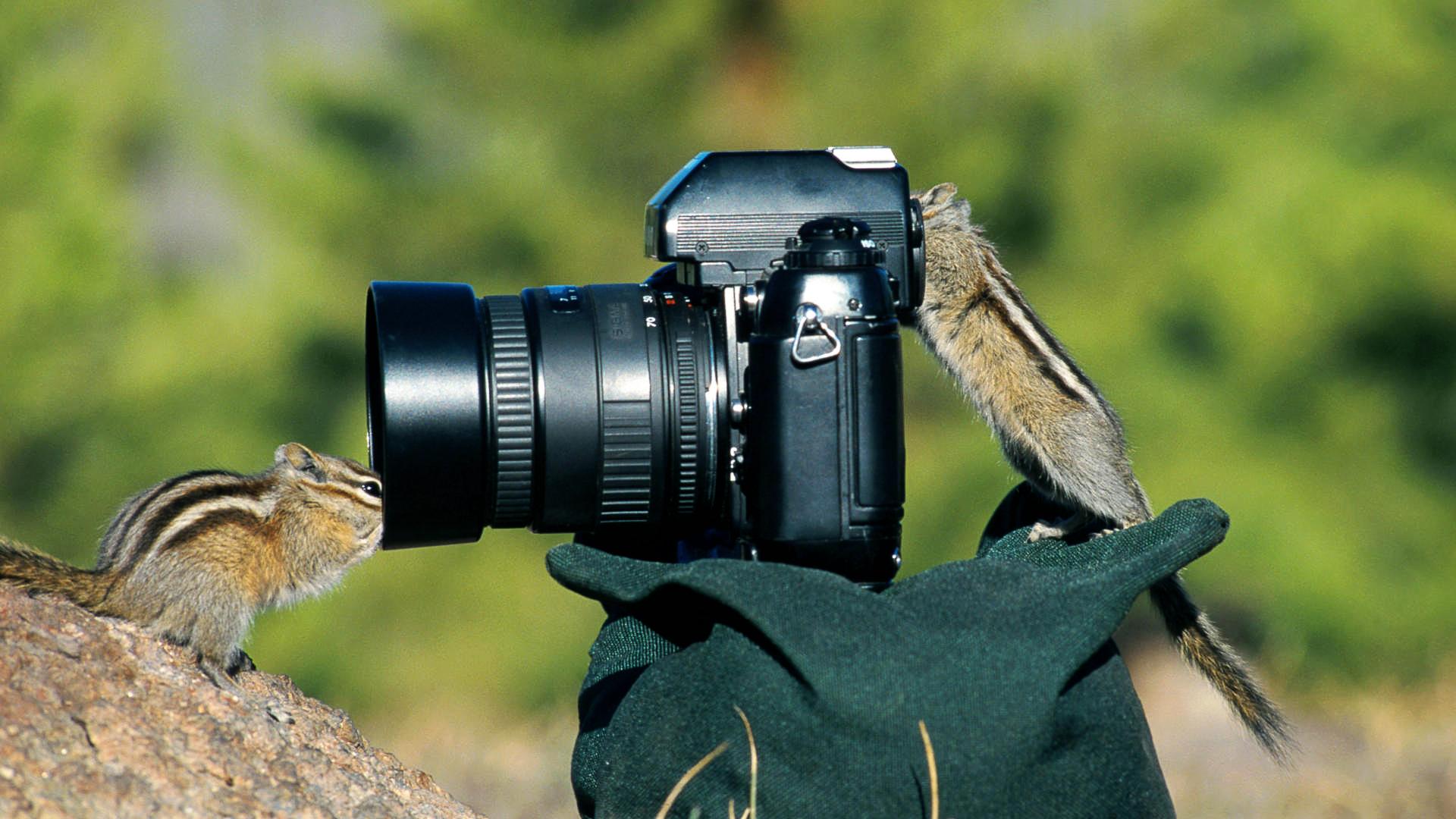 приедем, фотоохота на птиц объективы картона вырезать, стержне