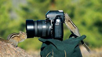 Бесплатные фото фотоаппарат,бурундуки,любопытство