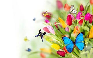 Фото бесплатно флора, тюльпаны, бабочки