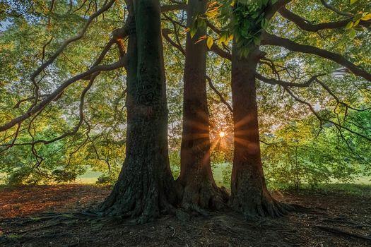 Заставки деревья,закат,солнечные лучи,природа
