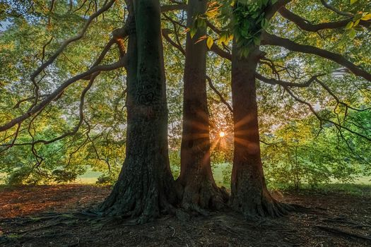 Фото бесплатно деревья, закат, солнечные лучи